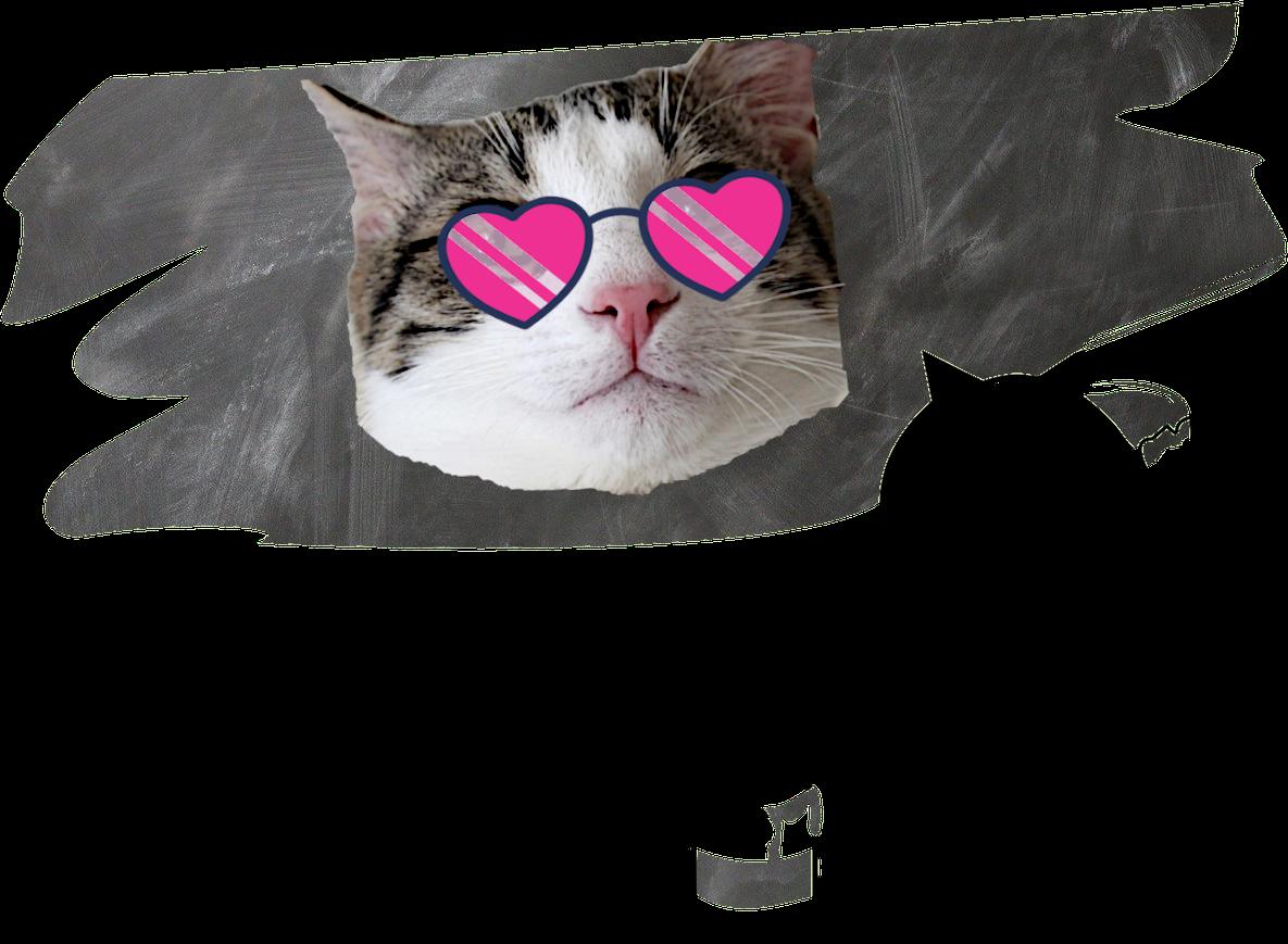 Symbolbild. So cool sind wir in Wirklichkeit gar nicht. Aber auch nicht so streng, wie der Rest der Webseite. Es wäre einer Studierendenvertretung kaum würdig, keine einzige Katze abgebildet zu haben, zumal Katzen einfach toll sind. Zum Thema Lizenzen: Pixabay/Pixabay/Pixabay. Lizenzfrei.